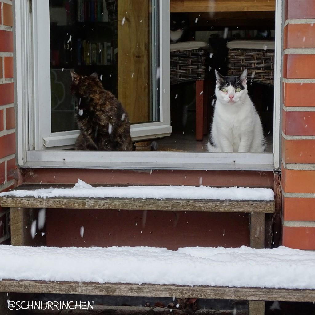 Die Planungen gehen draußen im Schnee weiter