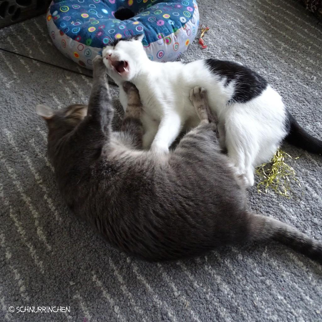 Ramses und Yuki haben eine kleine Meinungsverschiedenheit
