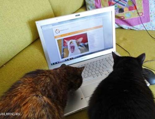 Unsere 10 beliebtesten Katzenblogs