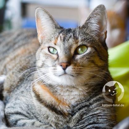 Katzen-Total-Ruby