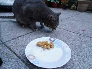 Ramses frisst die Muffins