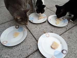 Alle fressen das Thunfisch Eis