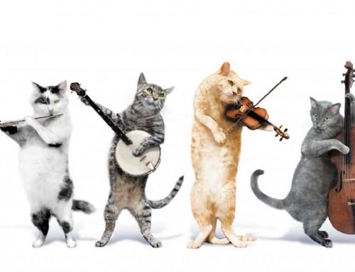 Unsere 10 beliebtesten Lieder mit Katzen
