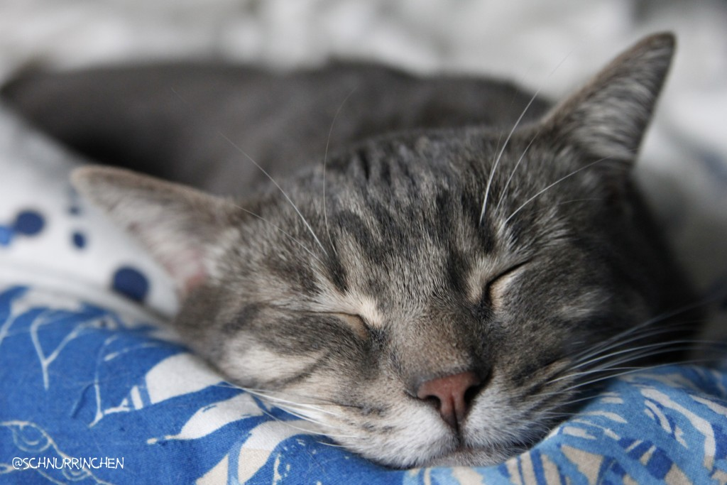 schlafender_ramses