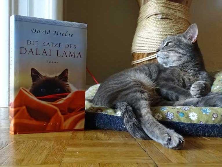 Katze des Dalai Lama