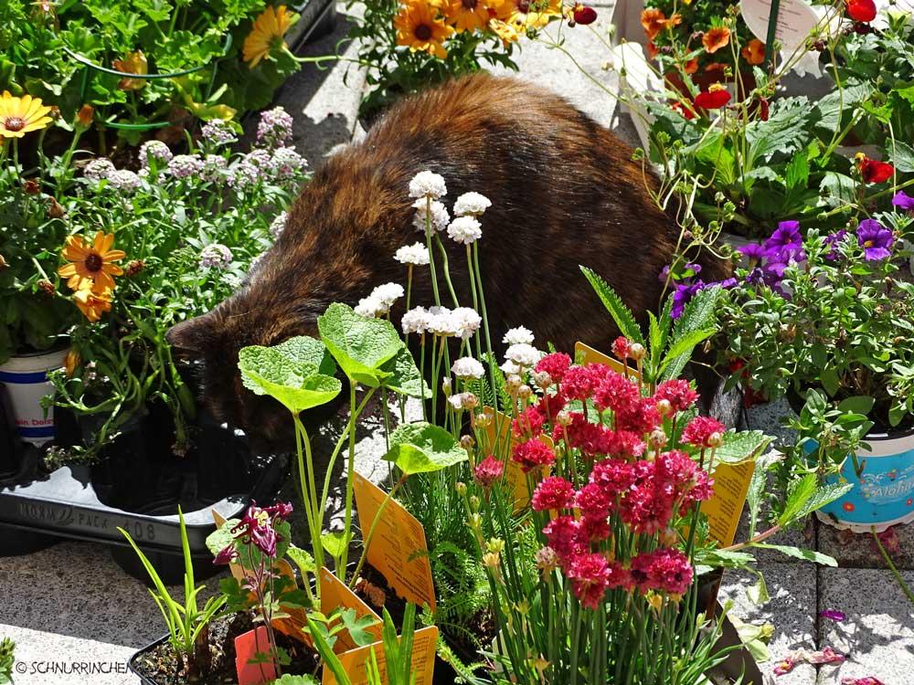 Brownie begutachtet die Blumen