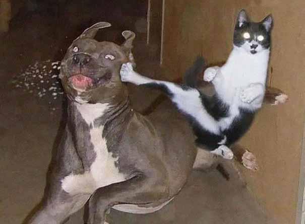 Ninja cat mit hund