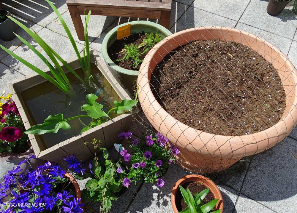 Wasserpflanze und Wiese
