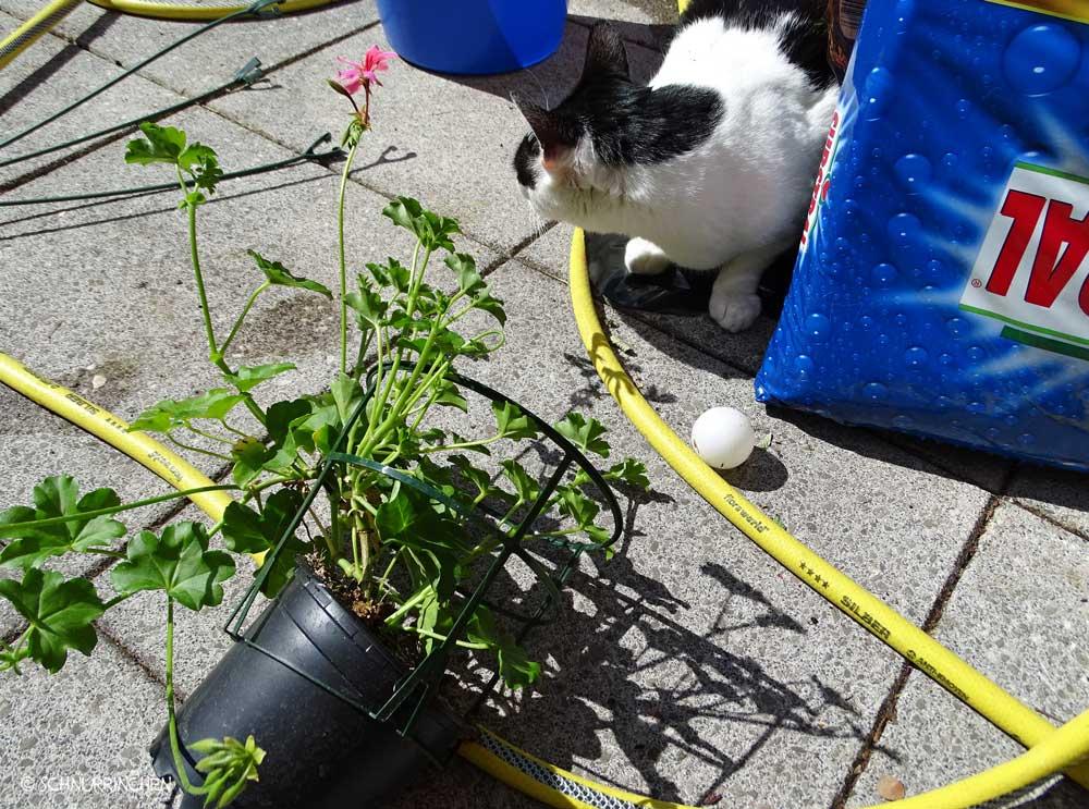 Yuki mit Blumenerde