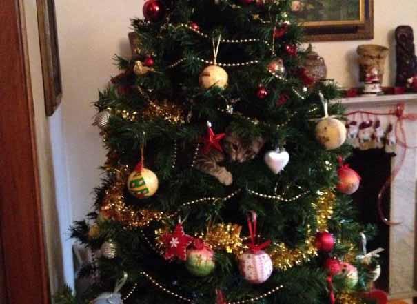 ninja cat weihnachtsbaum