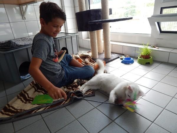 Kids4cats