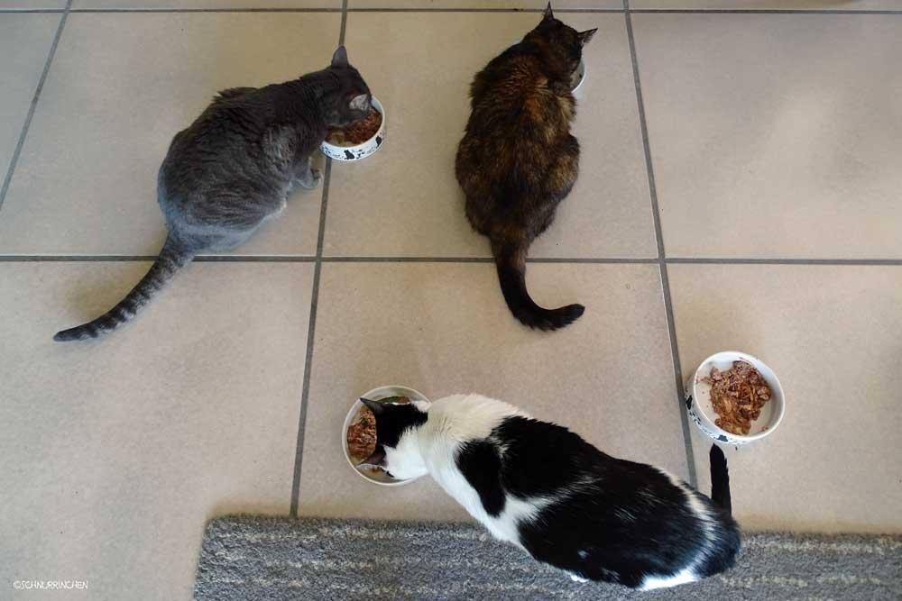 Alle zusammen fressen