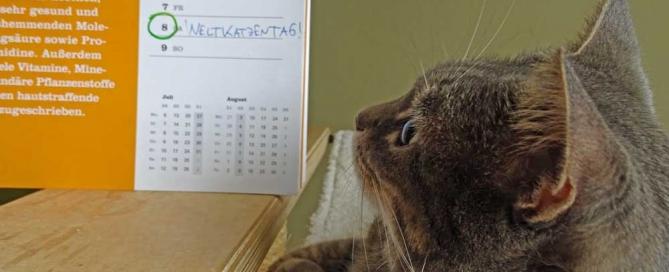 Ramses Weltkatzentag