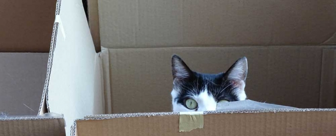 Yuki im Karton