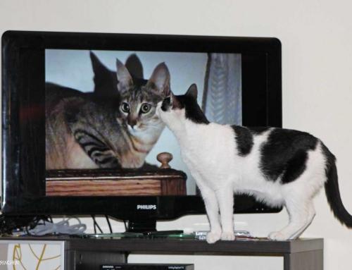 Unsere 10 beliebtesten Serien mit Katzen