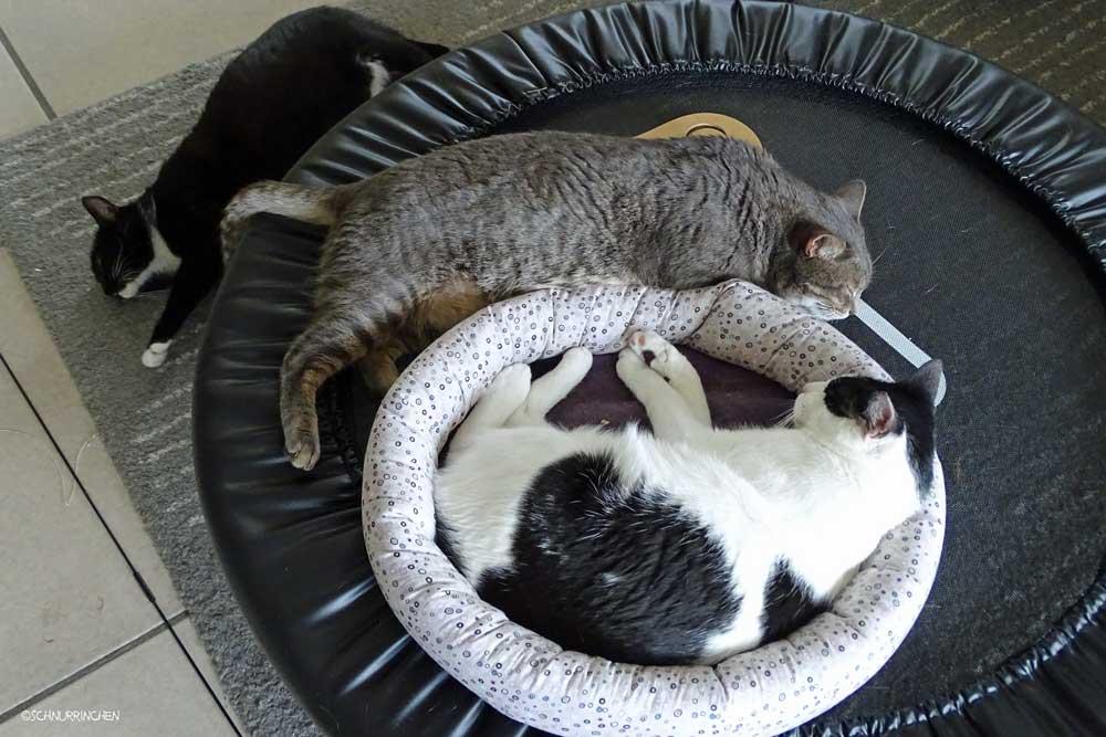 Alle schlafen zusammen