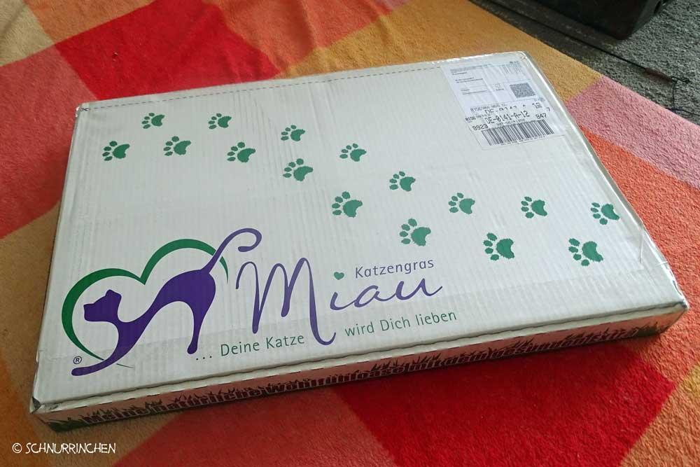 Katzengras im Karton