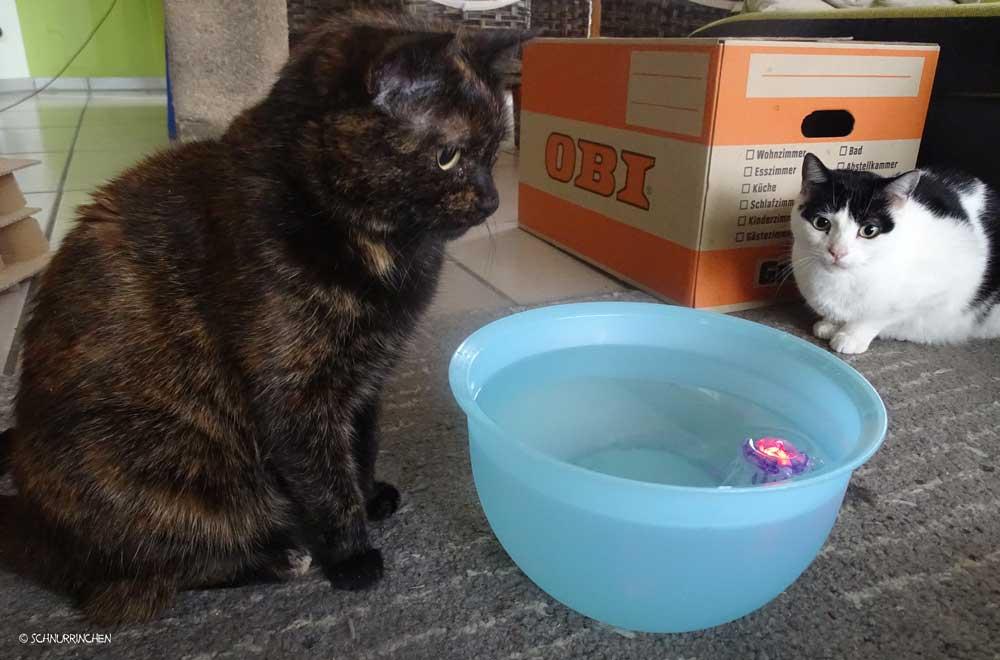 Brownie und yuki begutachten den Aquabot