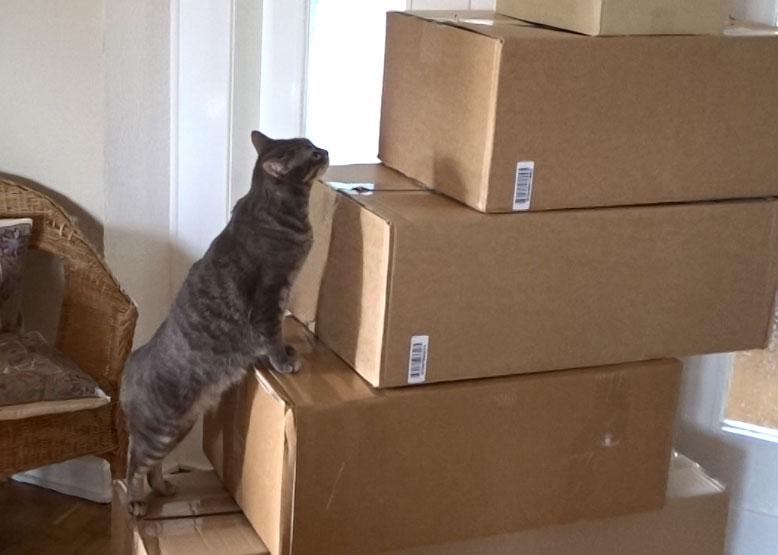 Ramses kontrolliert den Kartonstapel