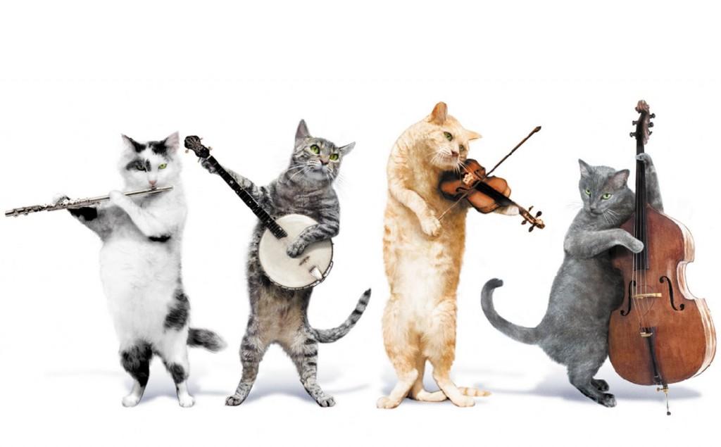 10 Kreative Geschenke Fur Katzen Schnurrinchen
