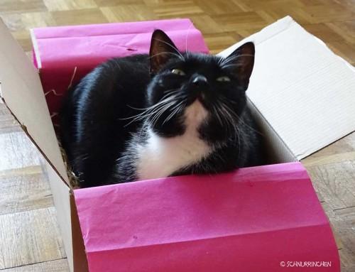 Luckypetbox – Überraschungsbox für Katzen
