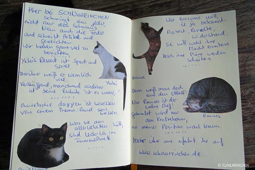 Katzenbloggerbuch unser-Bei