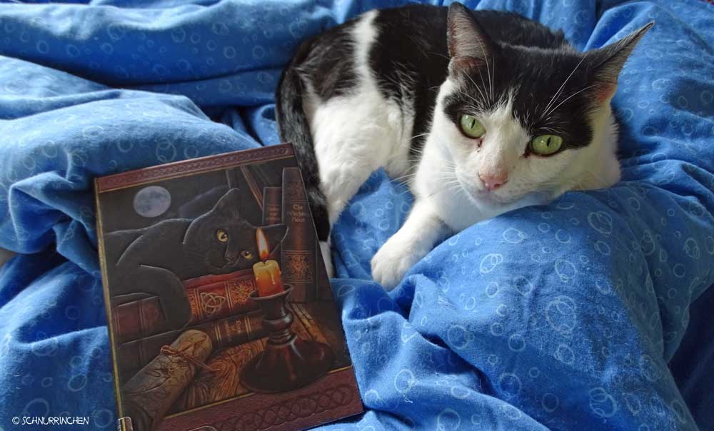 Yuki mit dem Katzenbloggerbuch