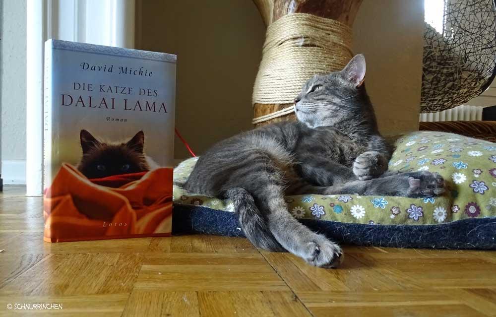 Ramses und die Katze des Dalai Lama