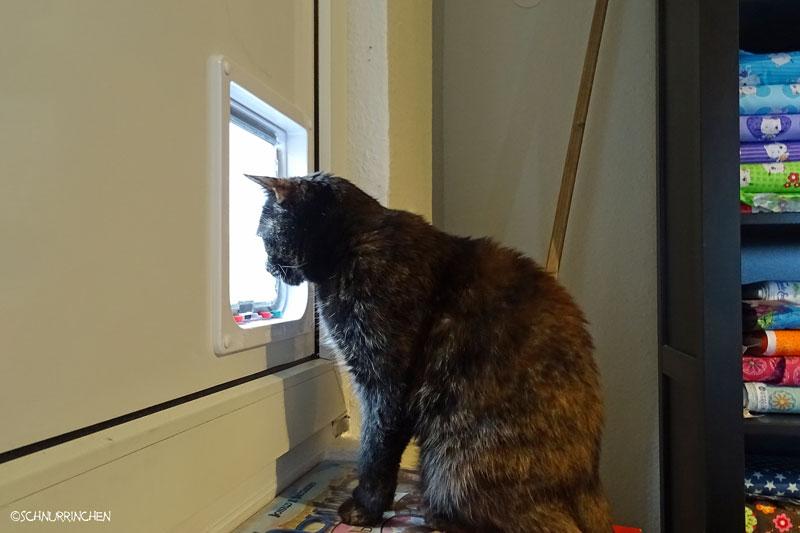 Brownie Katzenklappe