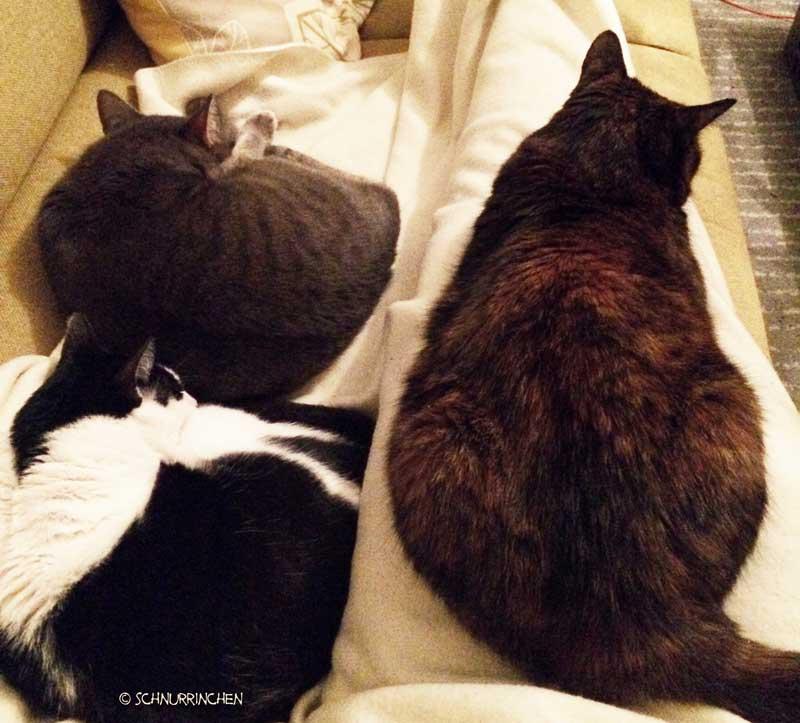 Katzenschnurren