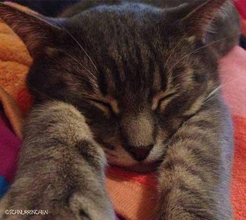 Ramses Katzenschnurren