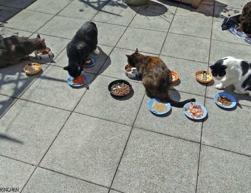 10 kreative Geschenke für Katzen