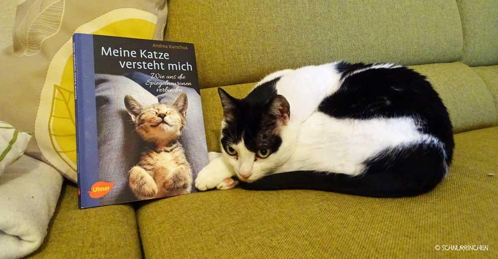 Andrea Kurschus Meine Katze versteht mich