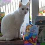 Beitragsbild Kinderbuecher mit Katzen