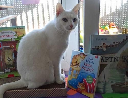 10 niedliche Kinderbücher mit Katzen