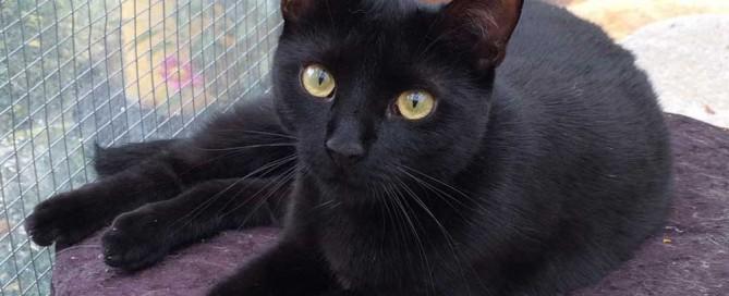 Aberglaube schwarze Katze