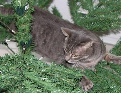 5 Dinge, die ihr an Weihnachten auf keinen Fall tun solltet (aus Sicht von uns Katzen)