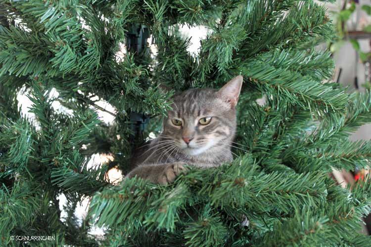 Ramses Katze im Weihnachtsbaum