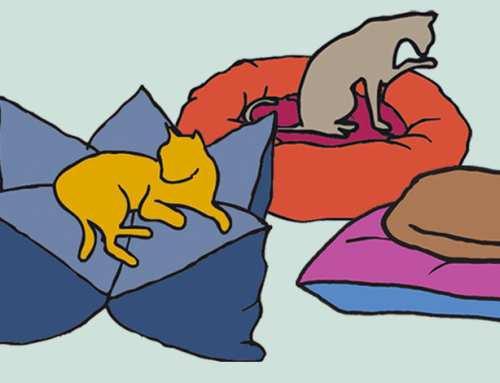 Neu im Shop: Katzenbett nach Wunsch individuell zusammenstellen